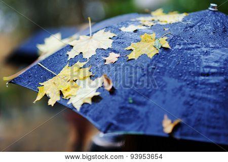 Yellow Autumn Leaves On A Black Umbrella
