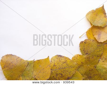 Autumn Leaf 5