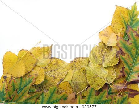 Autumn Leaf 8