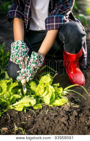 Woman In Gloves Working In Garden With Metal Spade
