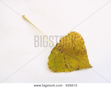 Autumn Leaf 14