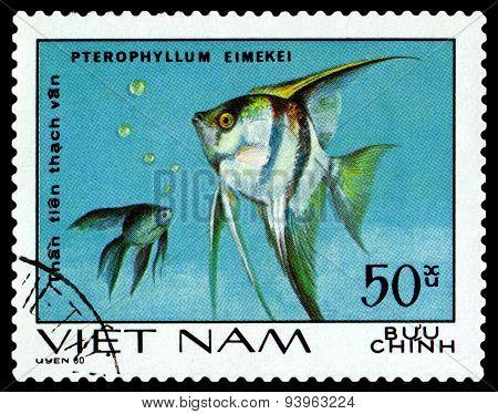 Vintage  Postage Stamp. Pterophyllum Eimekei.