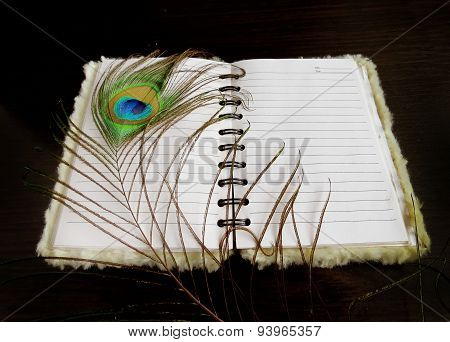 Notepad with a peacock feather on dark background