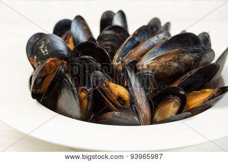Italian Cuisine. Mussels