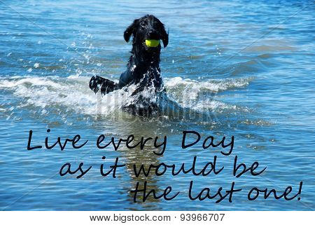 Dog Play With Ball In Water Quote Live Every Day