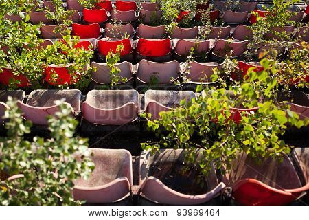 Overgrown old stadium seats