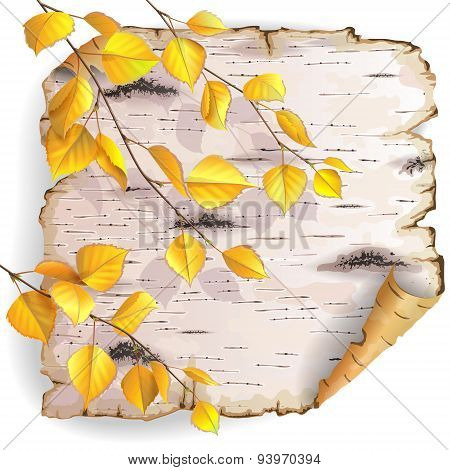 Birch Bark And Leaves