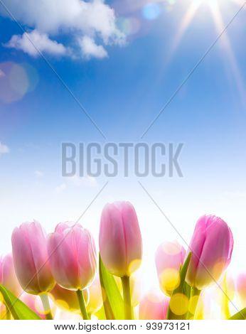 Art Tulip Spring  Flowers  In The Sunlight