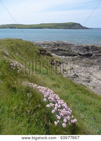 Flowers And Beach Cliff Seascape