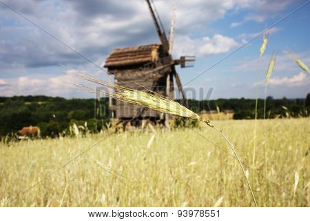 Rural Landscape With A Wheat Germ And A Windmill