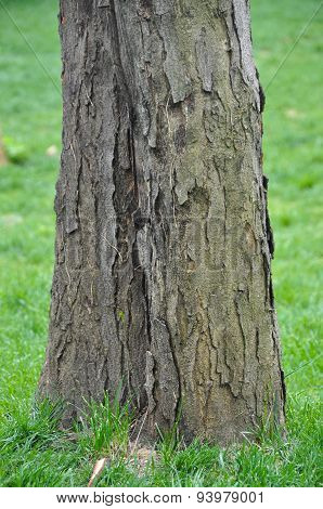 Bark and grass