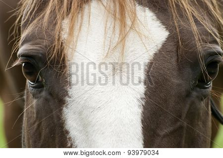 Horse face close up