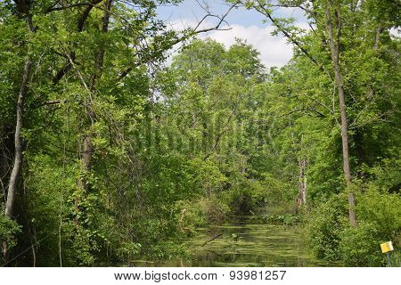 tree lined swamp