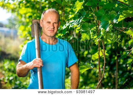 Farmer in the grape plantation