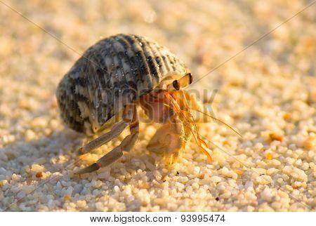 Beach Walker Exotic Creature