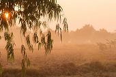 image of eucalyptus leaves  - Good morning Sunrise and leaves eucalyptus Nature - JPG