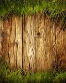 image of grass  - Spring grass background - JPG