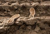 foto of sole  - Two shoe soles lost in a muddy field - JPG