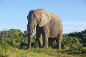 pic of encounter  - Close encounter with an elephant in Addo Elephant National Park South Africa - JPG