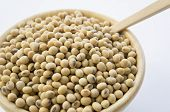 picture of soybeans  - soy soybean closeup vegetable nutrition soya asian