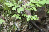 pic of fern  - Green Fern Leaf in a sunny day macro  - JPG
