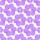 picture of lilas  - Seamless pattern with purple flowers on a white background - JPG