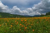 pic of cloud forest  - Beautiful mountain landscape with orange flowers in the meadow on a background of mountains forest and blue sky with clouds - JPG