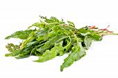 foto of sorrel  - Green leaves of garden plant sorrel sour is isolated on a white background - JPG