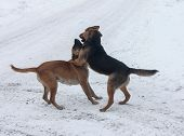 stock photo of stray dog  - Two stray dogs find out the relationship - JPG
