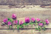 foto of red clover  - Row of clover flowers on wooden background - JPG