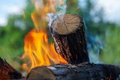 picture of firewood  - burning firewood in nature - JPG