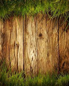 stock photo of grass  - Spring grass background - JPG