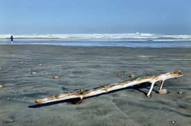 picture of mile  - A man and an old tree log that washed on Ninety Mile Beach Northland New Zealand - JPG
