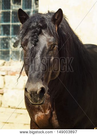 the head of a large brown horse
