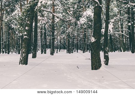 Winter trees in forest after the snowfall
