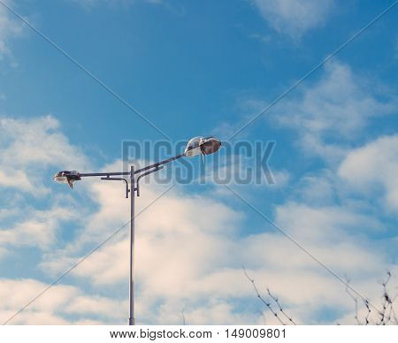Ice-covered street lamp against the blue sky
