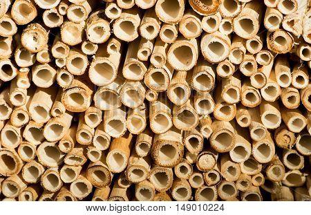 Cut Bamboo Sticks Background