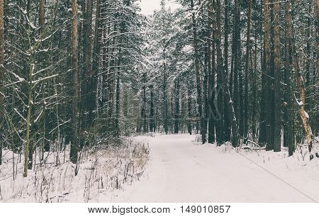 Snowly road in winter forest after the snowfall