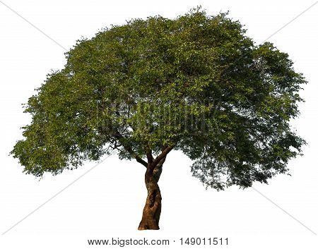 Tree gree environment nature plant life solitary