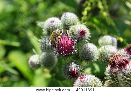 blooming flowers of medicine plant agrimonies in the meadow
