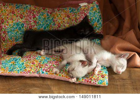 Relax Group Cute Kitty Cat Sleeping