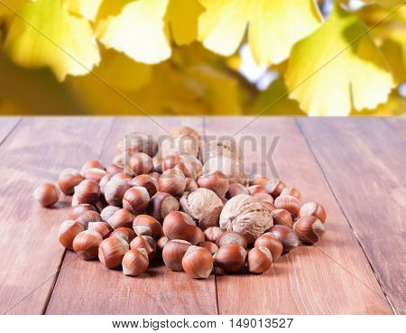 Heap of hazelnuts on blurred background of leaves