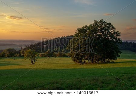 Evening landscape in magical colors. Forested hill in the background with small and large tree in the foreground