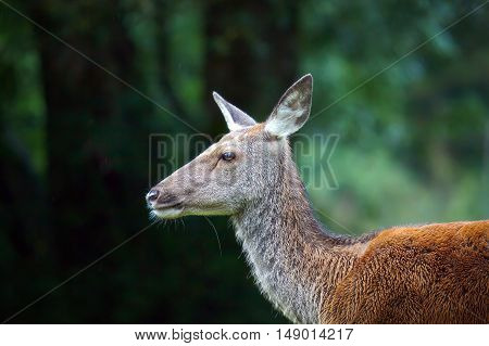 Little deer in the forest. Half-length portrait of deer deer cub.