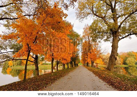 Autumn October Colorful Park. Foliage Trees Alley