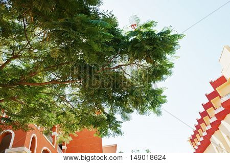 Decorative Bushes And Trees On Courtyard Of Resort Garden