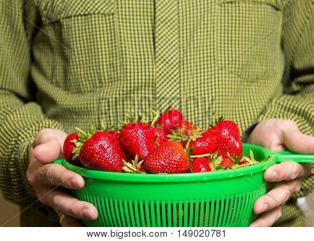 Full Bowl Of Red Juicy Strawberries In A Man's Hand