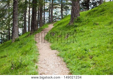 Tourist trail through the forest in Dolomite Alps, Italy