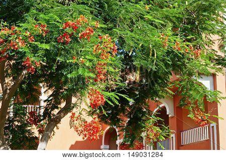 Orange Blossom Trees On Garden Of Resort