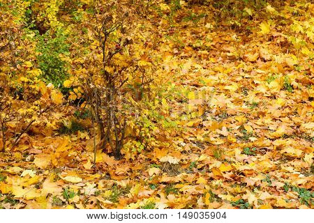 Autumnal Vegetation Covered In Leaves.